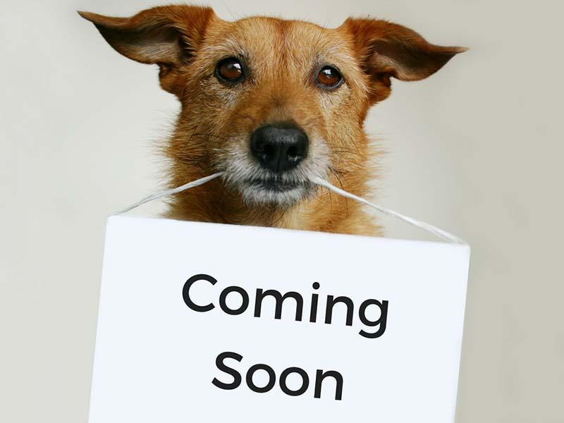 Saredon-Terriers-con